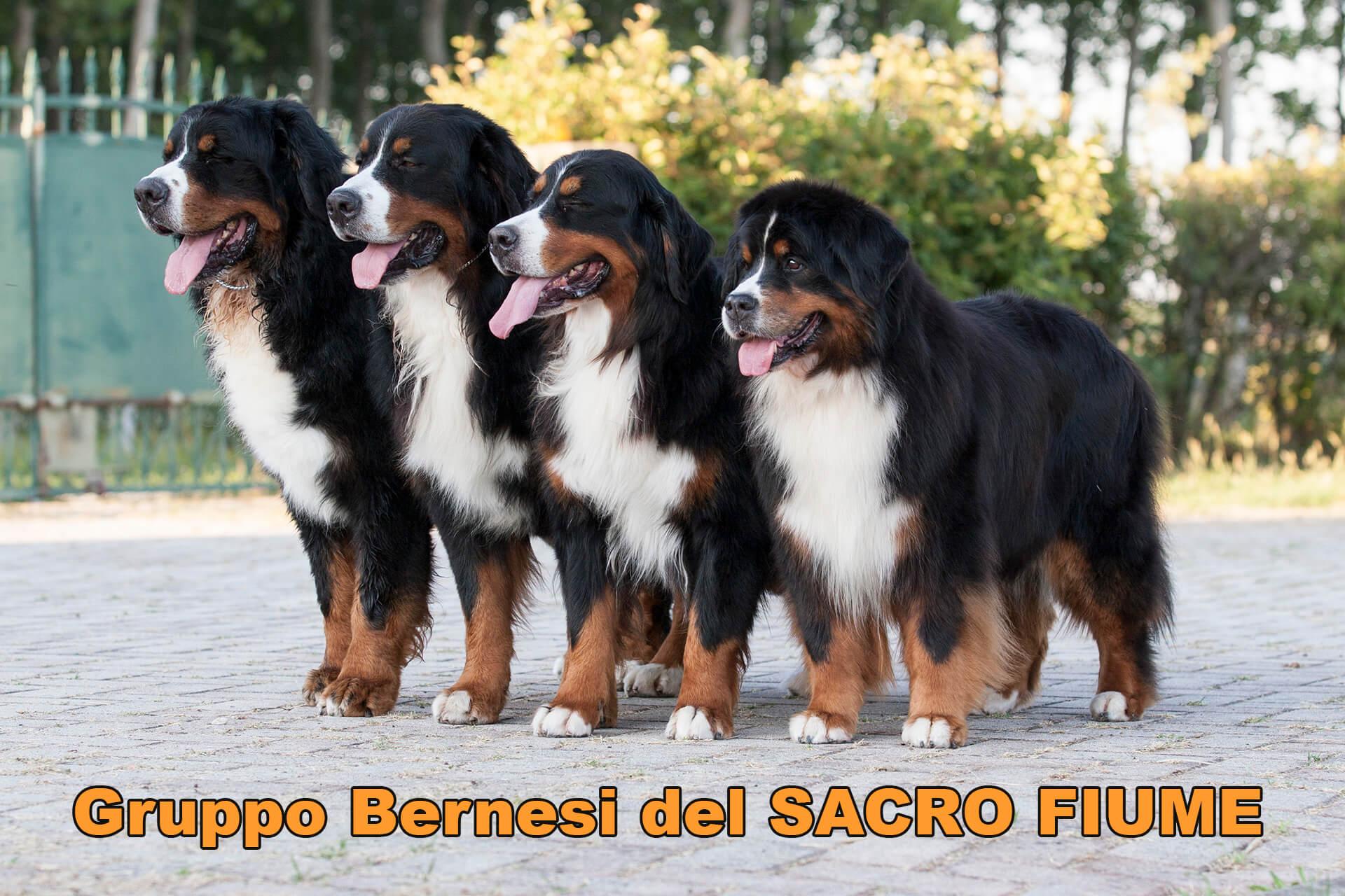 Gruppo Bernesi