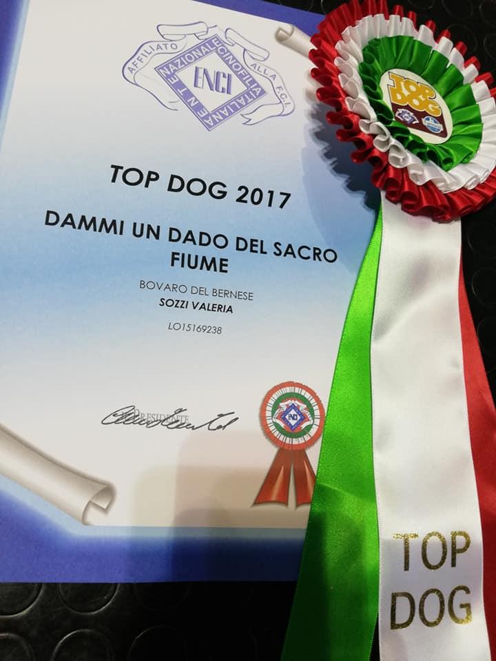 top-dog-Dado